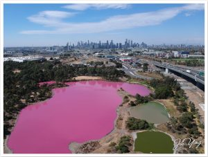 West Gate Park Pink Lake